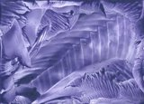 11-Blauwviolet